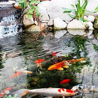 gardens - koi pond,  I would love to have a koi pond in my garden!    koi pond garden