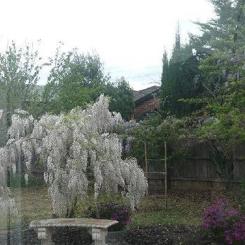 gardens - bench, trees, garden,  My SIL gorgeous garden   Melbourne, Australia!