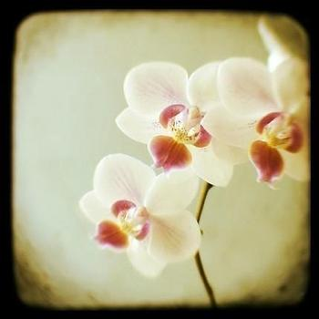 Art/Wall Decor - Three Wishes- Signed Original Fine Art Photograph - Alicia Bock by AliciaBock on Etsy - orchid, print, square, alicia bock, etsy
