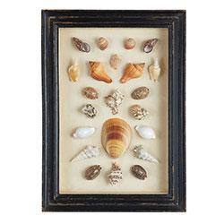 Art/Wall Decor - Shadowboxed Shells - Clam/Assorted | Wisteria - shells