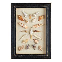 Art/Wall Decor - Shadowboxed Shells - Spindle/Assorted | Wisteria - shells