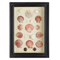 Art/Wall Decor - Shadowboxed Shells - Scallops/Assorted | Wisteria - shells