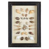 Art/Wall Decor - Shadowboxed Shells - Cowry/Assorted | Wisteria - shells