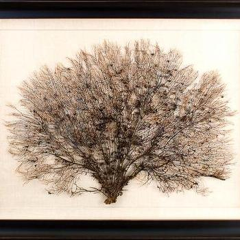 Art/Wall Decor - Giant Sea Fans | Natural Curiosities - sea fan, art
