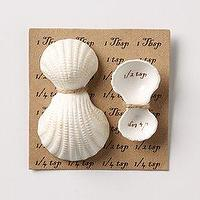 Decor/Accessories - Shell Measuring Spoons - Anthropologie.com - shell, meauring, spoons