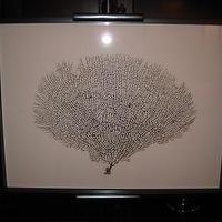 Art/Wall Decor - Large Framed Black Sea Fan Seafan Coral Reliquary by 5963impala - sea fan, art, coral, shells