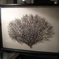 Art/Wall Decor - Large Framed Black Sea Fan Seafan Coral Reliquary by 5963impala - sea fan, coral, beach, seafan