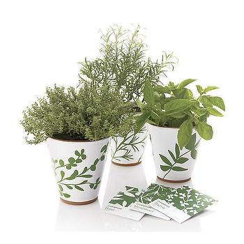 Decor/Accessories - Herb Thyme Planter | Crate&Barrel - herb, planters