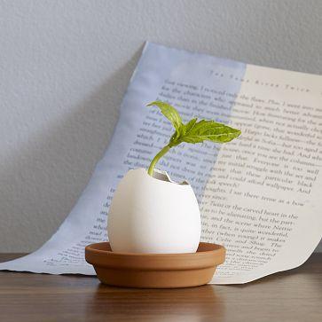 Egg Hatch Plant West Elm