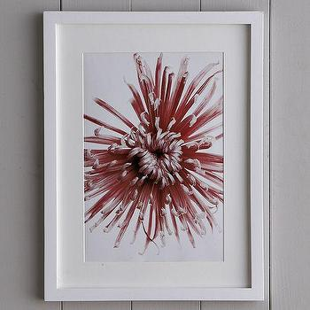 Art/Wall Decor - Clinton Friedman Wall Art - Chrysanthemum | west elm - clinton friedman, wall art, chrysanthemum