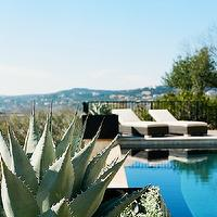 Design Sponge - pools - california pools, cactus, pool cactus, pool cacti, pool furniture, pool loungers, contemporary pool furniture, in ground pool,