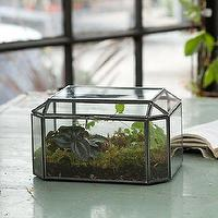 Decor/Accessories - Trinket Box Terrarium - Terrain - glass, steel, trinket, box, jewelry, terrarium,