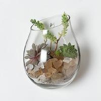 Art/Wall Decor - Floating Wall Terrarium - Terrain - terrarium, glass, floating, wall, decor