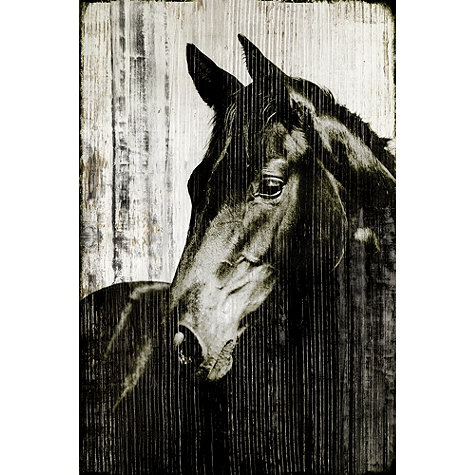 Horse Look 4 Less And Steals And Deals
