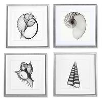 Art/Wall Decor - Shell X-Ray Photography | Williams-Sonoma - black and white shell photography, framed black and white shell photography, shell x-ray photography,