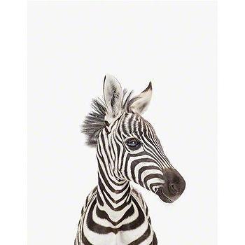 Baby Zebra Close-Up, Sharon Montrose I The Animal Print Shop