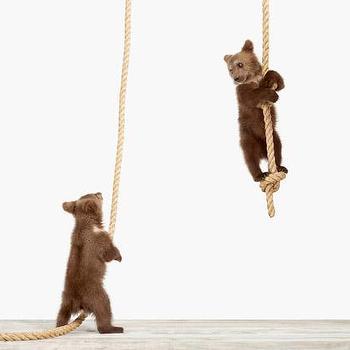 Climbing Cubs, Sharon Montrose I The Animal Print Shop