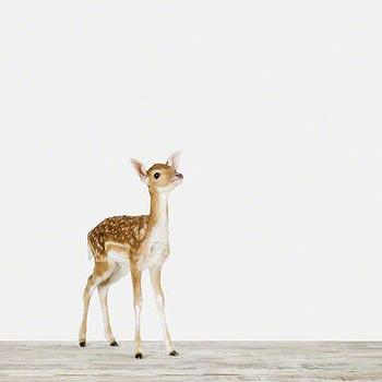 Art/Wall Decor - Baby Deer - Sharon Montrose | The Animal Print Shop - baby animal nursery art, baby animal nursery photography, fawn photography, baby deer photography,