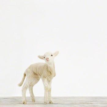 Art/Wall Decor - Lamb No. 1 - Sharon Montrose I The Animal Print Shop - lamb print, baby lamb art, lamb art print, lamb photography, baby animal nursery art, baby animal nursery photography,