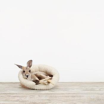 Art/Wall Decor - Baby Kangaroo No. 1 - Sharon Montrose | The Animal Print Shop - baby animal nursery art, baby animal nursery photography, baby kangaroo photography,