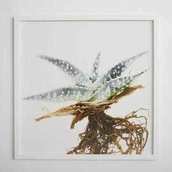 Art/Wall Decor - Clinton Friedman Wall Art Aloe Plant | west elm - aloe plant wall art, aloe plant photography, aloe plant framed photography,