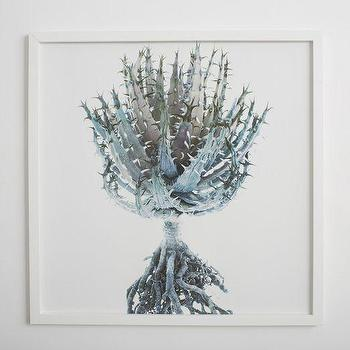 Art/Wall Decor - Clinton Friedman Wall Art�Aloe Root | west elm - aloe art, aloe plant art, aloe plant photography, aloe plant framed photography,
