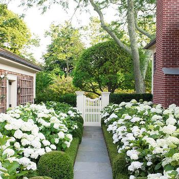 Veranda - home exteriors - picket fence, white picket fence, boxwood, slate oath, slate pathway, hydrangea bushes,  Slate pathway lined with