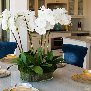 Blue Velvet Dining Chairs, Contemporary, dining room, Shannon Wollack