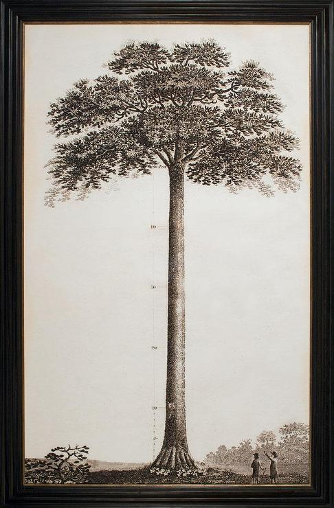 John Muir Tribute Tree Natural Curiosities