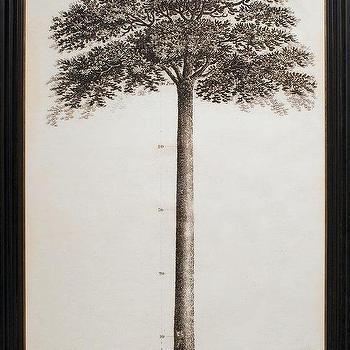 John Muir Tribute Tree, Natural Curiosities