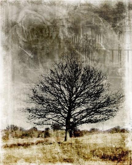 Black John Muir Tribute Tree