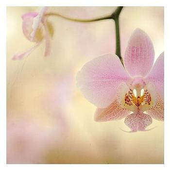 Orchids on Sunday- Original Signed Fine Art Photograph by AliciaBock on Etsy