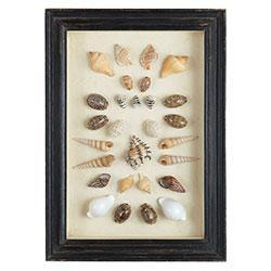 Shadowboxed Shells, Cowry/Assorted, Wisteria