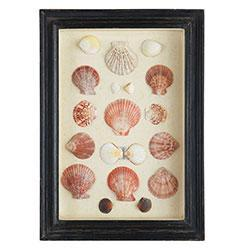 Shadowboxed Shells, Scallops/Assorted, Wisteria