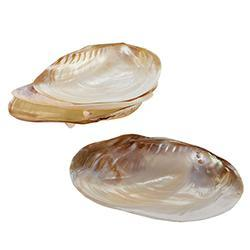 mother, pearl, shell, plate, plates, dish, dishes, nautical, Wisteria