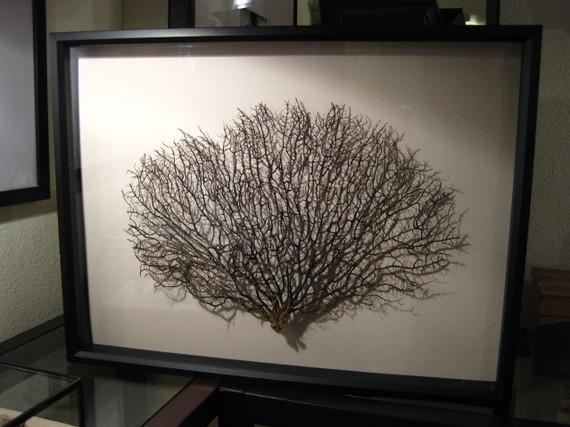 Preserved Sea Fan With Ivory Mat Art Restoration Hardware