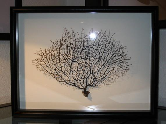 Framed Black Sea Fan Coral Reliquary