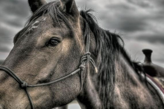 Dark Horse Unique Applesandoats Etsy