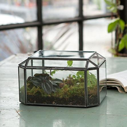 Trinket Box Terrarium Terrain
