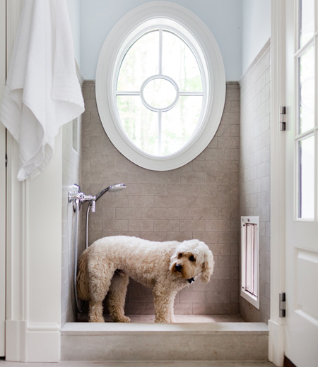 Dog Shower Contemporary Laundry Room