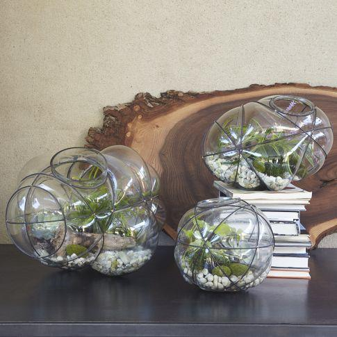Glass Terrariums Wood Base West Elm