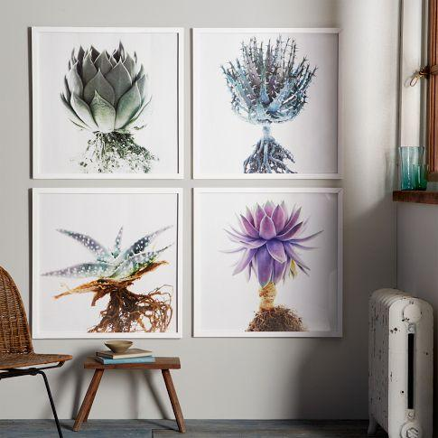 Clinton Friedman Colored Succulent Wall Art