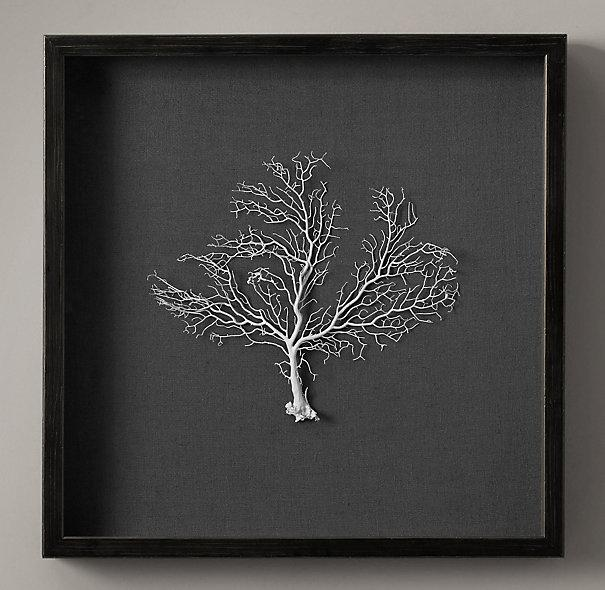 Framed White Sea Fan Seafan Coral Reliquary By 5963impala