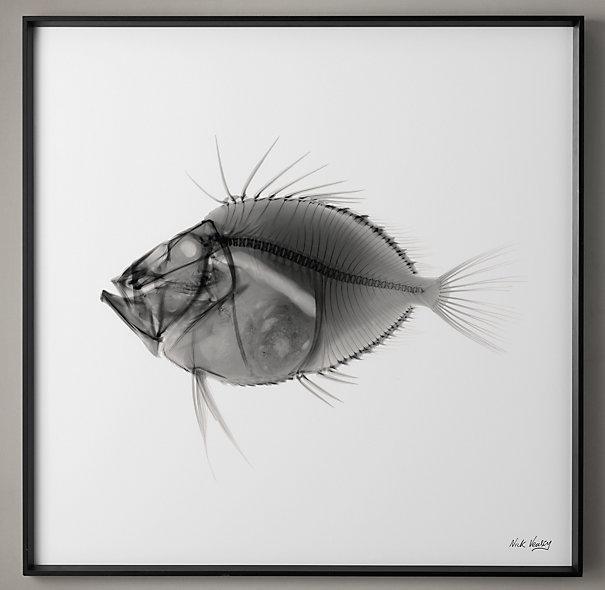 Nick Veasey Black X Ray Fish Photography