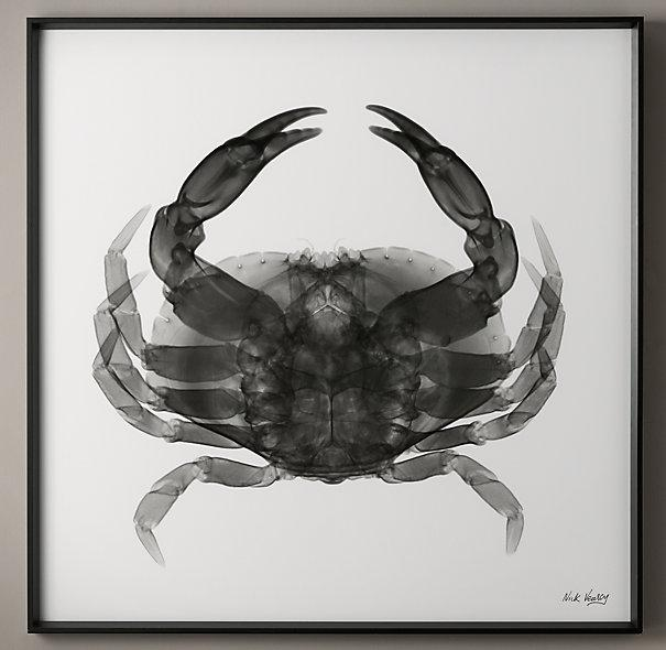 Nick Veasey Black X Ray Crab Photography
