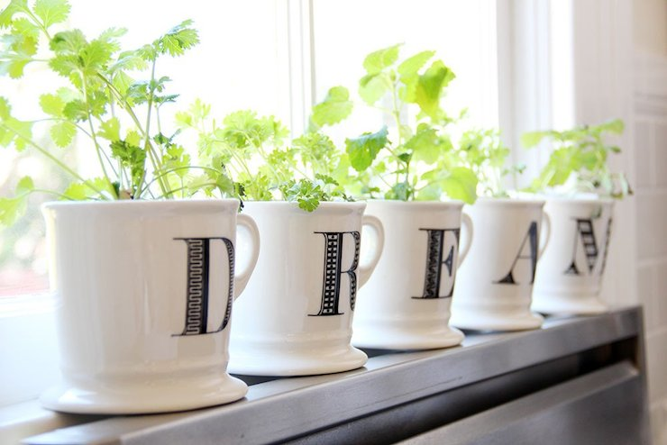 Windowsill Herb Garden - Transitional - kitchen - Apartment Therapy