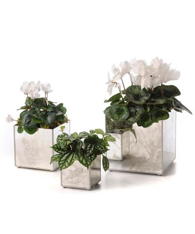 Mirror Orchid Silver Pot Set