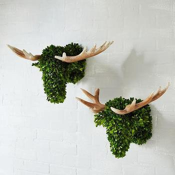 Lit Boxwood Topiary Pottery Barn