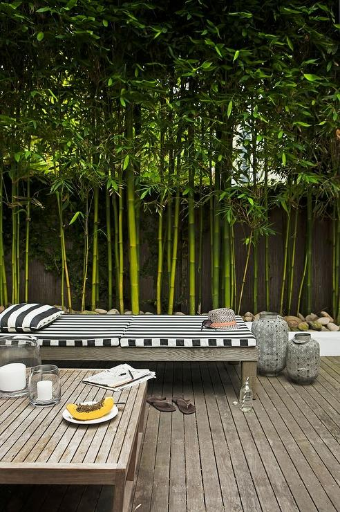 Patio With Bamboo Trees