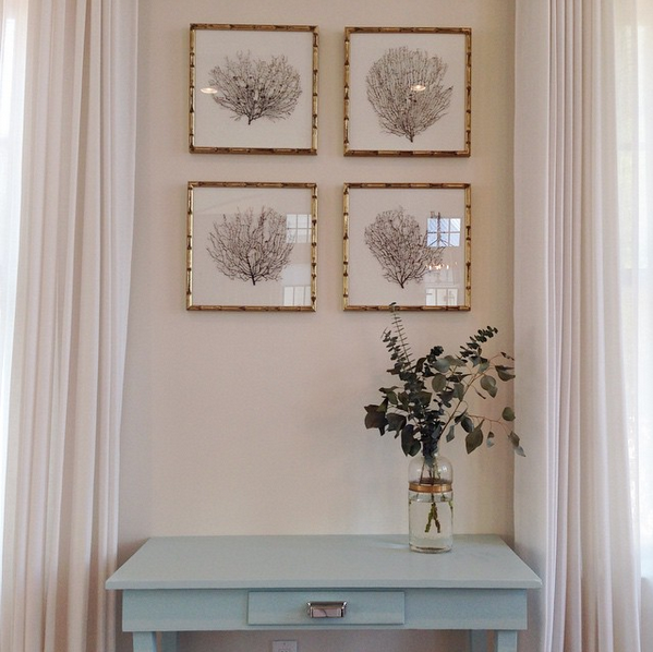 Framed Sea Fans in Gold Bamboo Frames - Cottage - Entrance/foyer